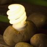 Приказка за картофа или реална възможност за генериране на енергия?